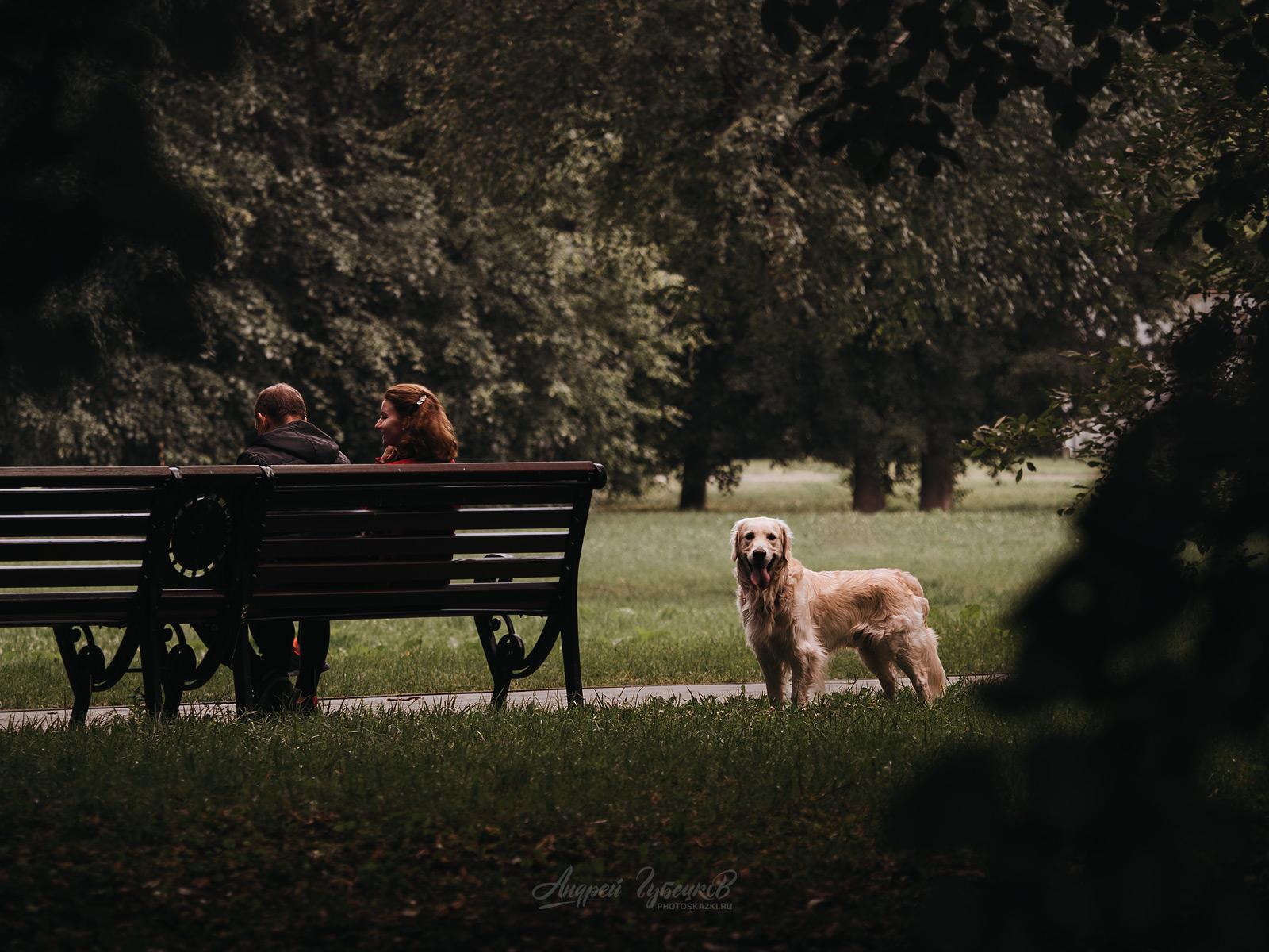 Пёс парковый