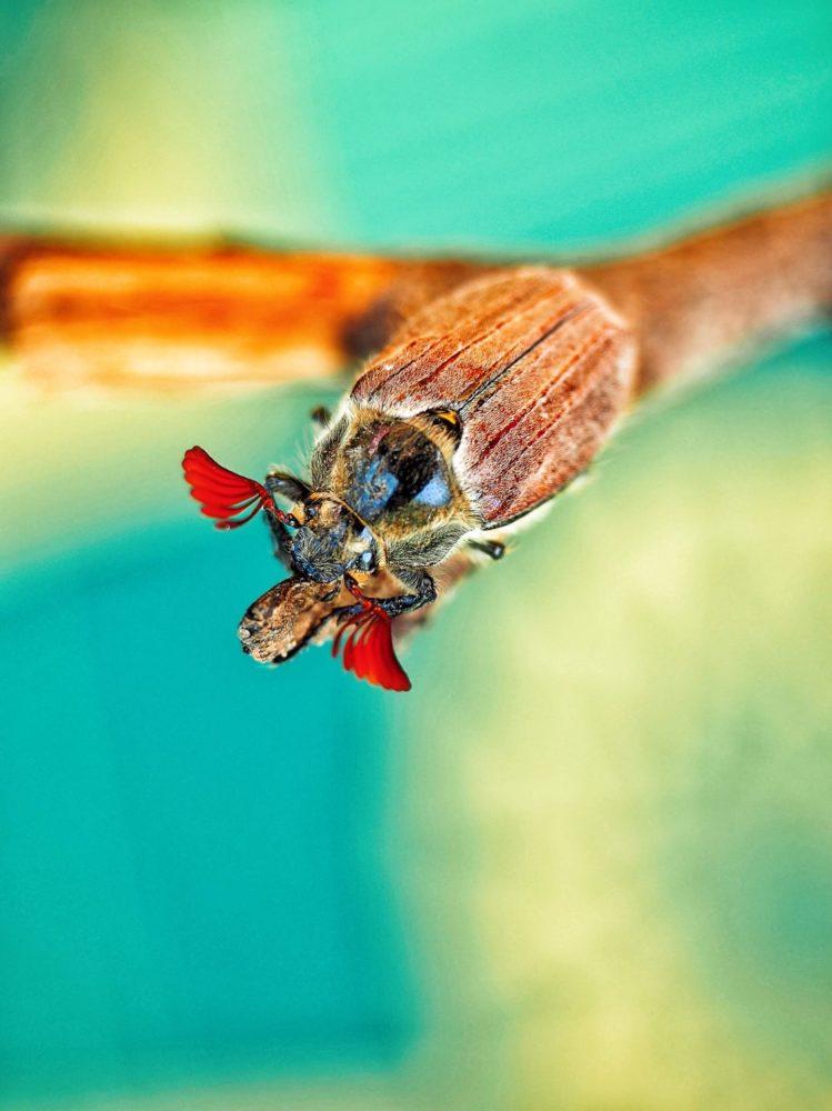 макро жук